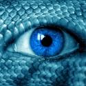 pythonskinned-eye